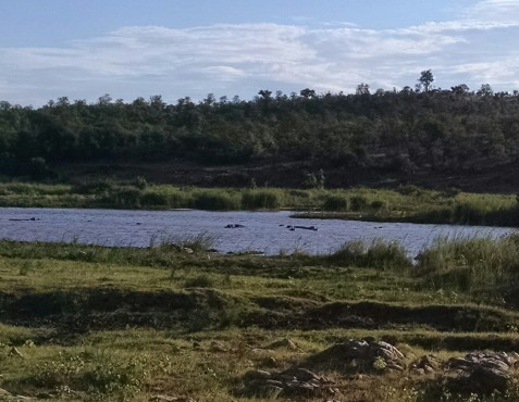 Hippos in the Olifants River