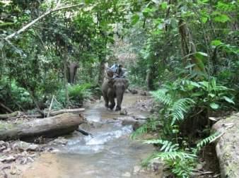 2008 Visit #2: Trudging through jungle near private village location