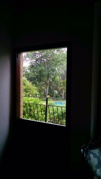 View from my room of garden