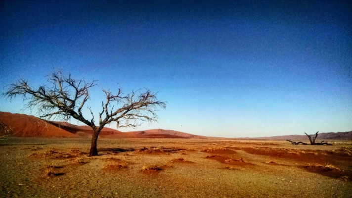 Crooked trees in the desert