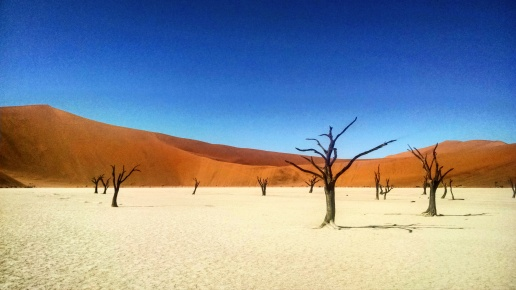 Deadvlei's Camel Thorn Trees