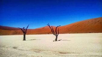 Deadvlei's Camel Thorn Trees