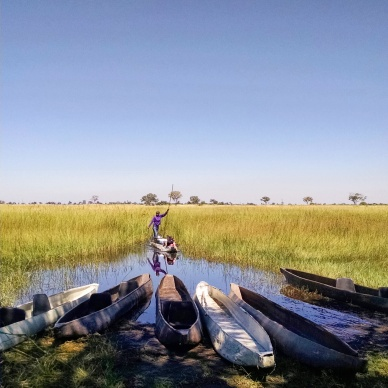 View from the campsite of the Okavango Delta