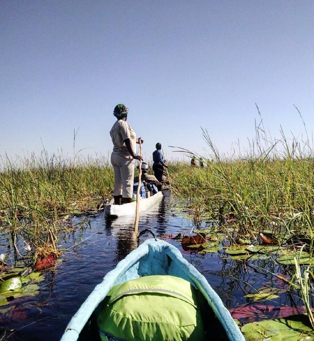 Mokoro ride through the reeds