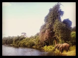 Chobe River Cruise
