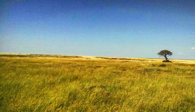 Grasslands of Etosha National Park