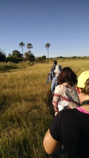 Nature hike through the Okavango Delta