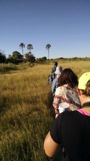 Nature hike through the Okavango Delta